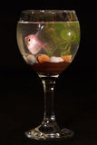 The fish in glass. A Fish in glass of water. Black ground Royalty Free Stock Images