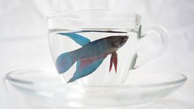 Fish in the glass stock footage