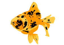 Fish gold. Isolated on a white background Stock Photography