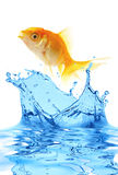fish gold small Στοκ Φωτογραφίες