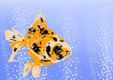 Fish gold. Fish is gold in water with bubbles Royalty Free Stock Photo