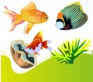 Fish, Goldfish, Marine Diversity Royalty Free Stock Image