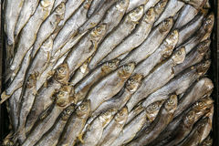 Fish gourmet sprat Stock Photos