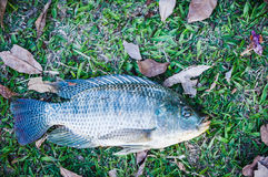 Fish on grass Stock Image