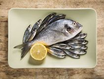 Fish in green plate Stock Image