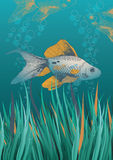 Fish in Green Water. Illustration of fish in green water Stock Image