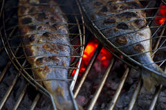 Fish on grill Royalty Free Stock Image