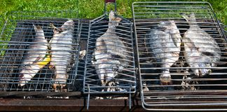 Fish on a grill Royalty Free Stock Photo