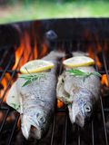 Fish on grill Royalty Free Stock Photos