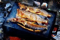 Fish on the grill. Summer barbecue concept. Close up with shallow DOF royalty free stock photos