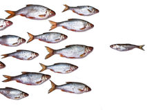 Fish group all by itself Stock Photo