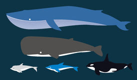 Fish group. Kind of Dolphin, whale , under water world, sea, ocean, cartoon, cute, on dark blue background, graphic vector illustration Stock Photos