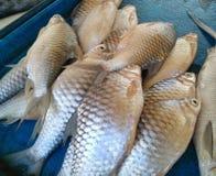 The Fish Stock Photo