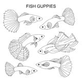 The fish are guppies. Royalty Free Stock Images