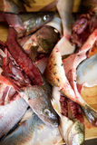Fish Guts detail Royalty Free Stock Photos