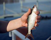 Fish in hand Stock Photo