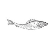 Fish. Hand drawn engraving seafood icon. Royalty Free Stock Photos