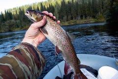 Fish in hand goldilocks Stock Images