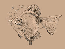 Fish, hand painted drawing of outline. Isolated on brown background Stock Photography