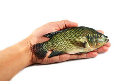 Fish on hand Stock Images