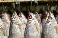 Fish hanging on hooks. Photo of fresh fish hanging on hooks in the production Stock Photography