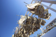 Fish hanging outside to dry with a blue sky Stock Photography