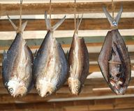 Fish Hanging to Dry Royalty Free Stock Photography