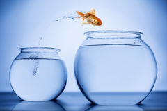 Fish happily jumping. From small bowl to a bigger bowl Royalty Free Stock Photos