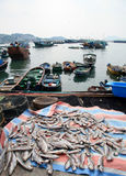 Fish harbor Hong Kong Royalty Free Stock Photos