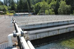Fish Hatchery. A salmon fish hatchery in the Paciifc Northwest Royalty Free Stock Image