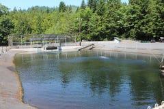 Fish Hatchery. A pond at a salmon fish hatchery Royalty Free Stock Image