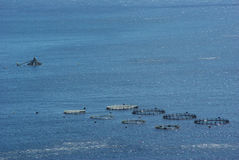 Fish hatchery. On Madeira island royalty free stock photography