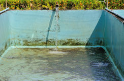 Fish Hatchery. Hatchery fish for industry and consumers Stock Images