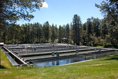 Fish Hatchery Ponds Stock Photography