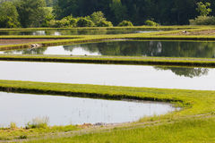 Fish Hatchery Royalty Free Stock Images