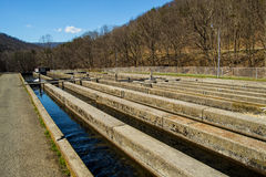 Fish Hatchery - USA Stock Images