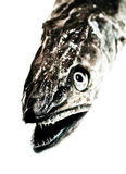 Fish head Stock Photo