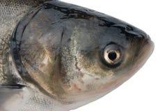 Fish Head Royalty Free Stock Photography