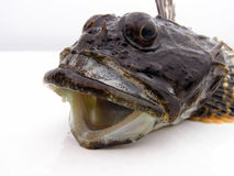 Fish Head Stock Photos