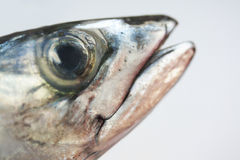 Fish head Royalty Free Stock Photo