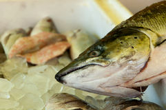Fish Head Stock Image