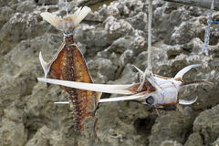 Fish head and  bones hanging Stock Images