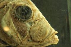 Fish head in formaldehyde stock photos