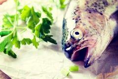 Fish head Royalty Free Stock Photo