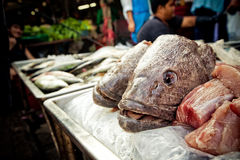 Fish Head for Sale. Fish Head at Thai Market stock photo
