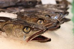 Fish heads Stock Image