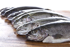 Fish Heads. Fresh fish heads in a row on dark walnut board Royalty Free Stock Photo