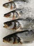 Fish heads and bodies on ice. In a store royalty free stock images
