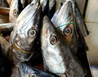 Fish heads close-up at the market. Fish heads  at the market Royalty Free Stock Photography