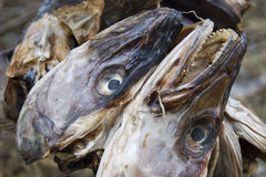 Fish heads hung to dry. Stock Photos